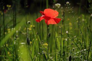 natuurbegraafplaats natuur geen grafonderhoud
